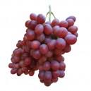 Uva Negra sin Pepitas